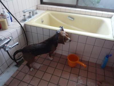 さくらお風呂