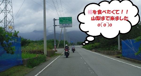 IMGP04980.jpg