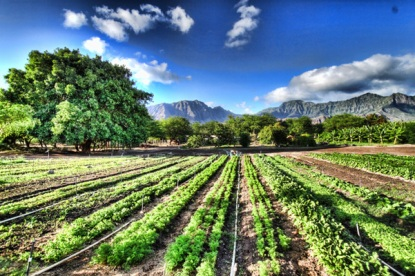 Organic-Farming-in-Promoting-Sustainable-Living.jpg