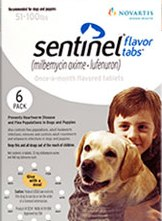 Sentinel_group_420.jpg