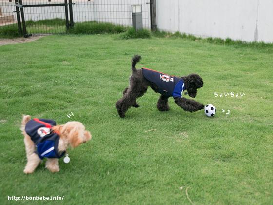 犬 日本代表 ユニフォーム
