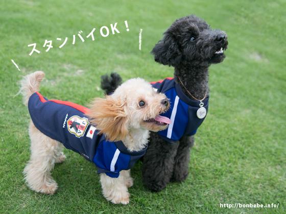 サッカー 犬 日本代表