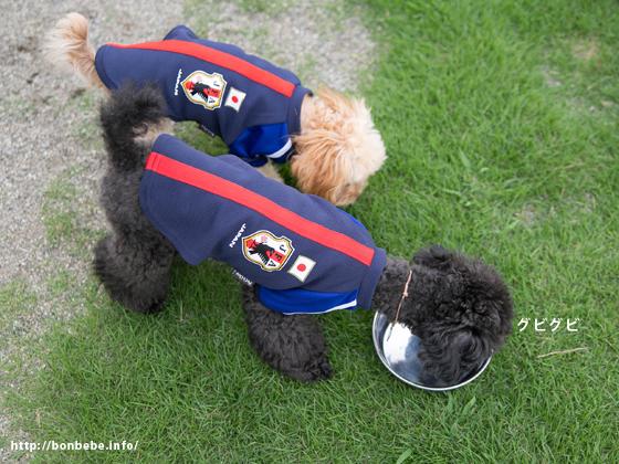 日本代表 ユニフォーム 犬