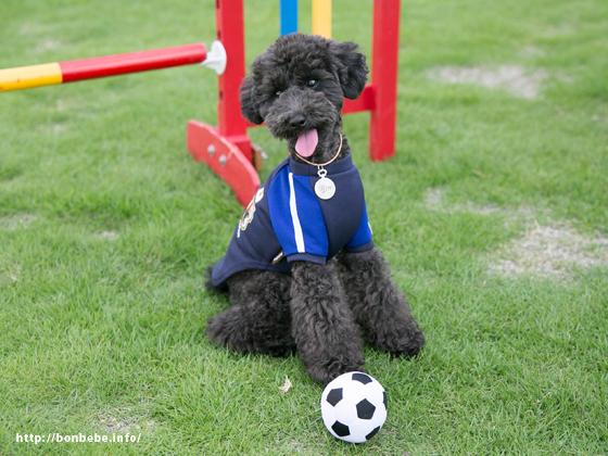 サッカー日本代表 犬 ユニフォーム