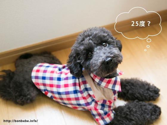 プレサーモc-25 犬服