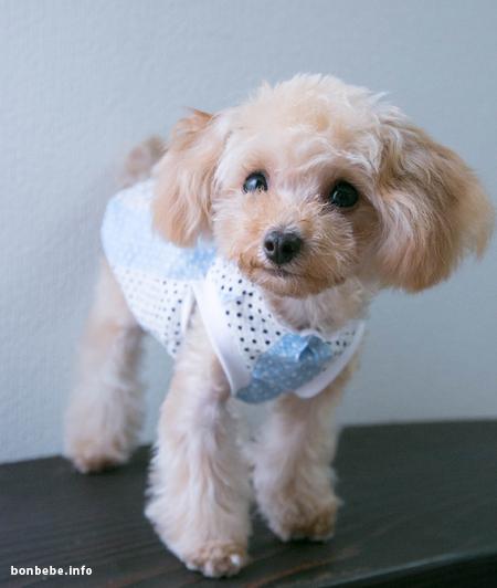 犬服ワンピース