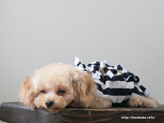 犬用術後服 カラー
