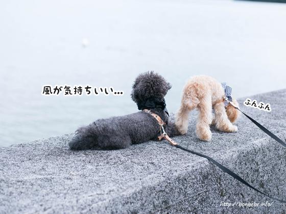 お散歩 犬