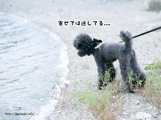 波打ち際 犬