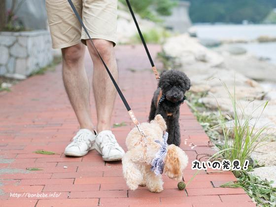 散歩 リード