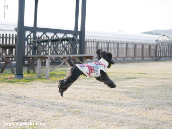 飛行犬 いまいち