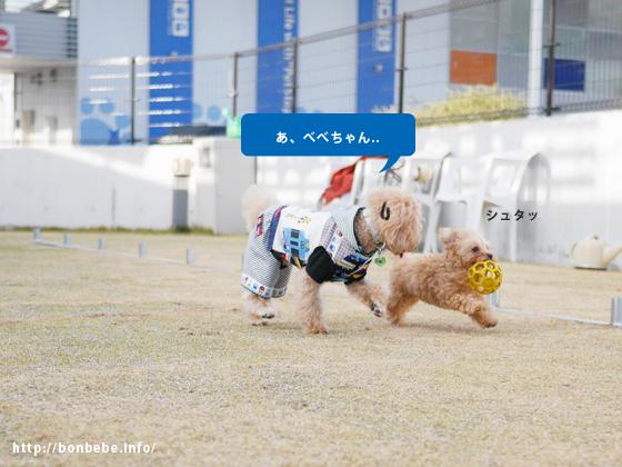 子犬 走る