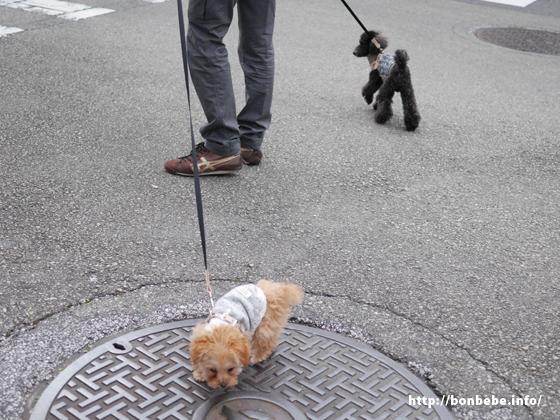 多頭飼い 散歩