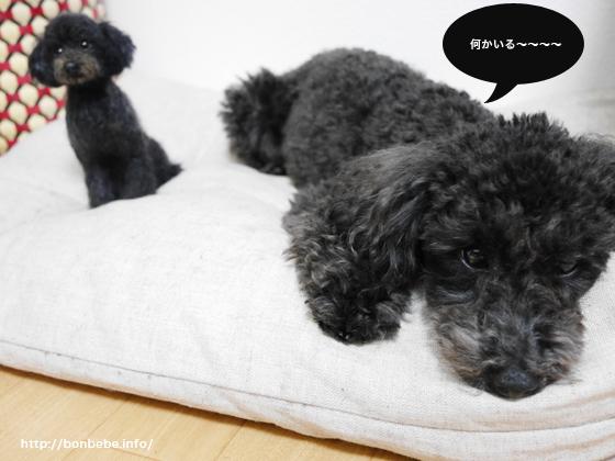 犬 羊毛フェルト