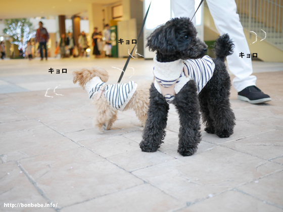 犬とアウトレット