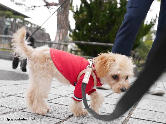 犬服 トイプードル