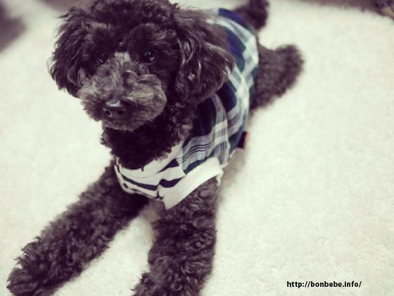 ガーゼ素材 犬服