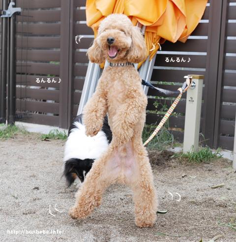 看板犬バジル