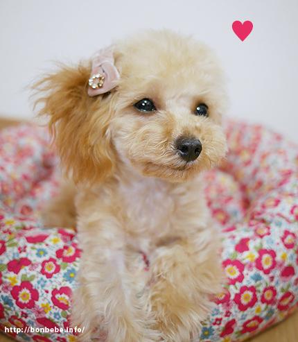 犬 リボン ピンク