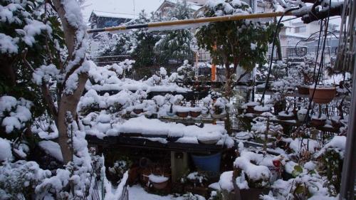 雪をかぶった盆栽棚