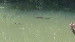005鯉と亀