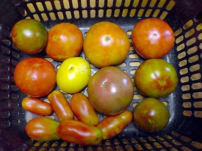 大玉トマト2014