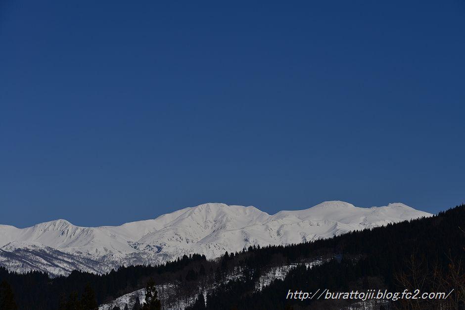 1.2014.03.24白山と福寿草