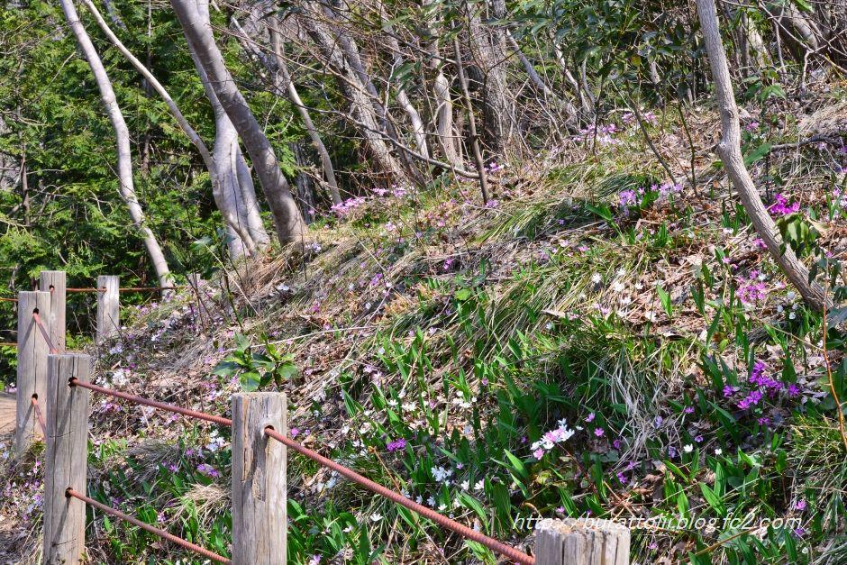 3.2014.03.28猿山雪割草