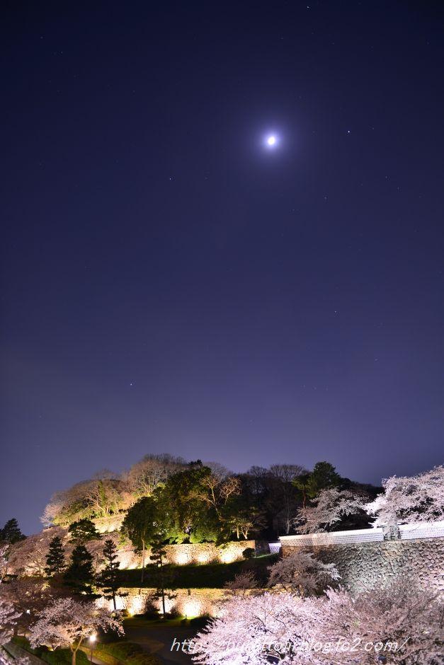 2014.04.07金沢城公園の桜4