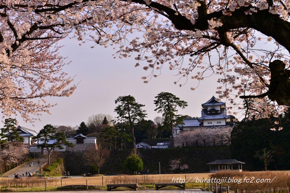 2014.04.07金沢城公園の桜2