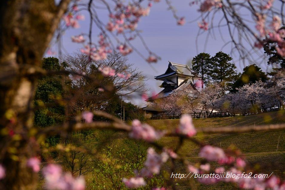 2014.04.07金沢城公園の桜1