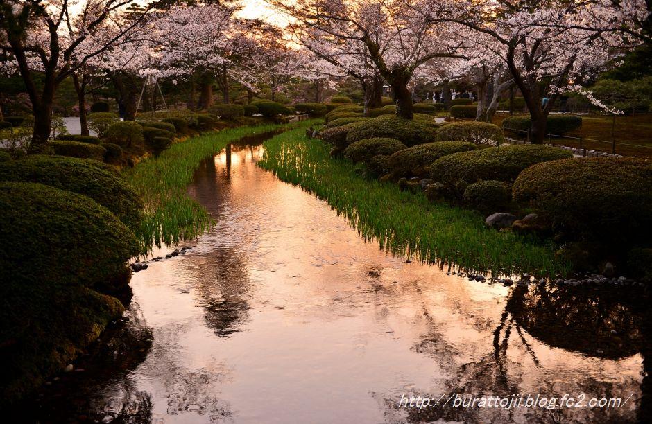 2014.04.07兼六園夜桜3
