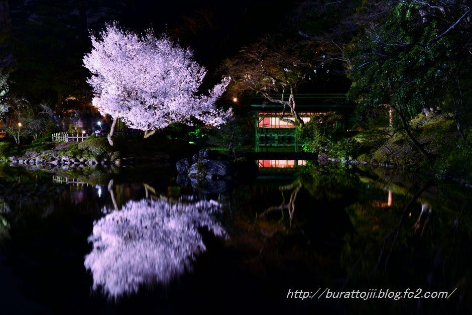 2014.04.07兼六園夜桜4