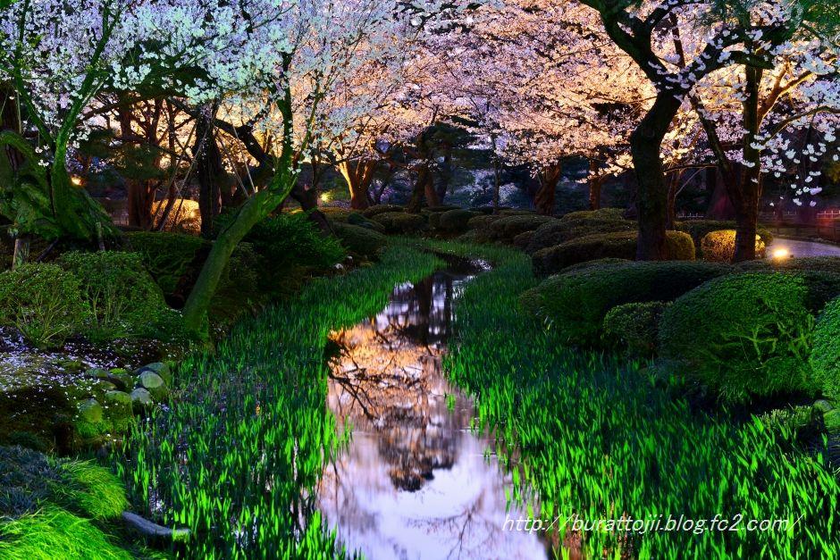 2014.04.07兼六園夜桜2