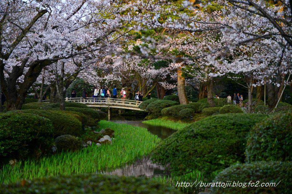 2014.04.07兼六園夜桜1