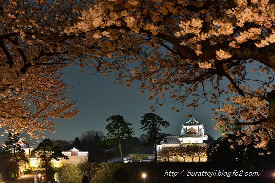 2014.04.08金沢城桜4