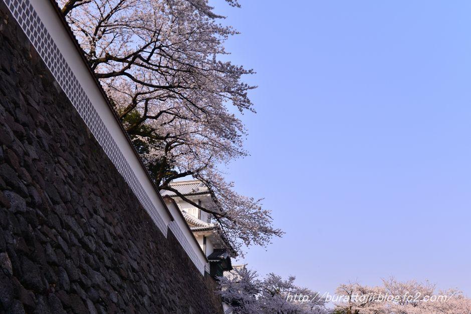2014.04.08金沢城桜2
