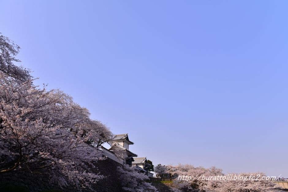 2014.04.08金沢城桜1