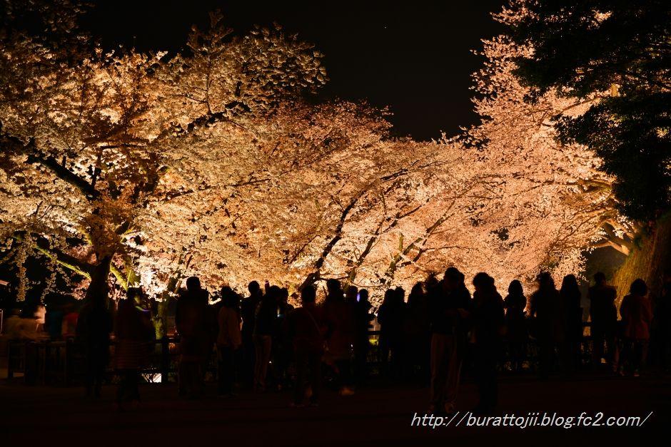 2014.04.08金沢城桜7