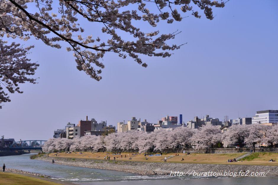 2014.04.09犀川桜13