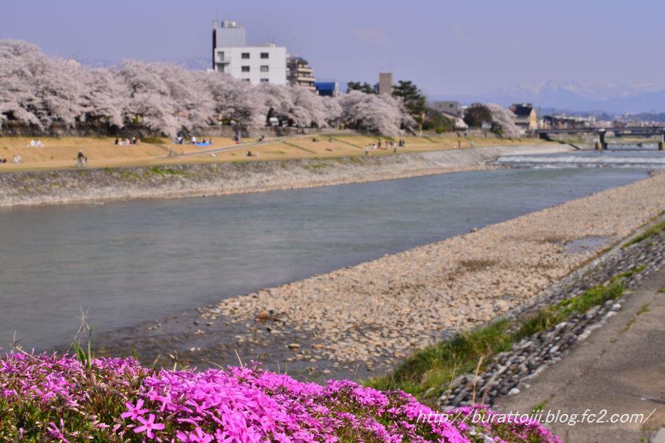 2014.04.09犀川桜14