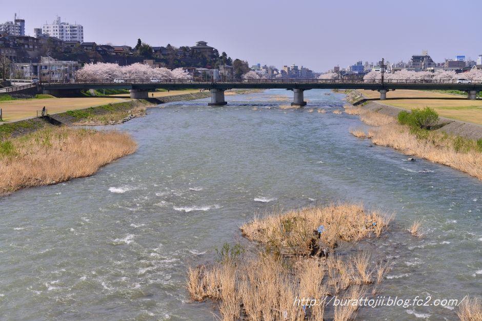 2014.04.09犀川桜12