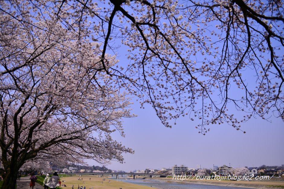 2014.04.09犀川桜7