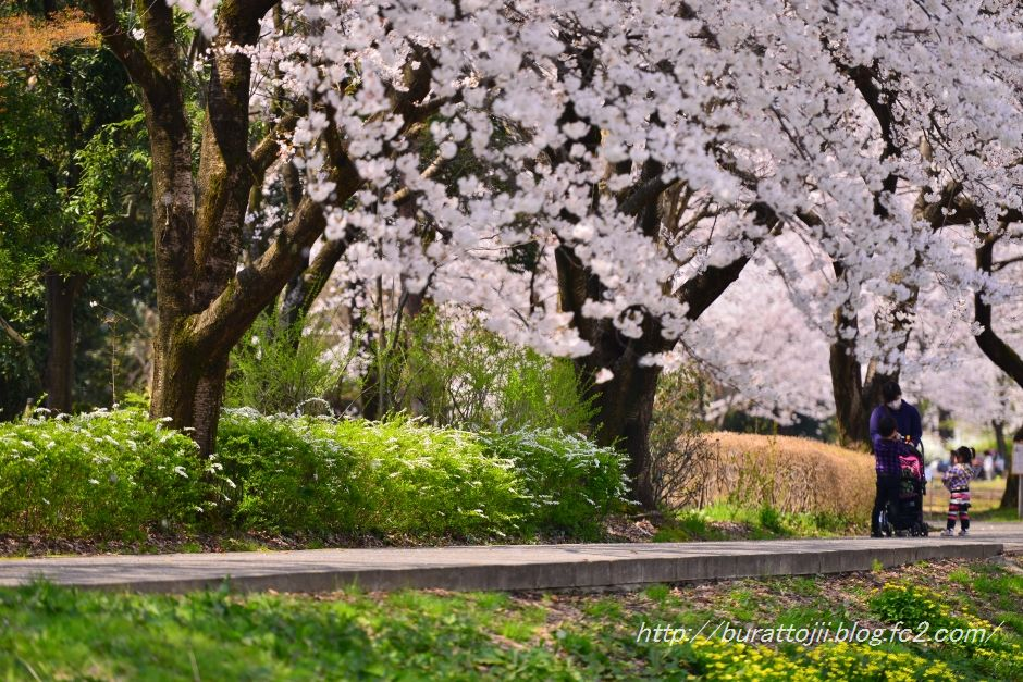 2014.04.09犀川桜8