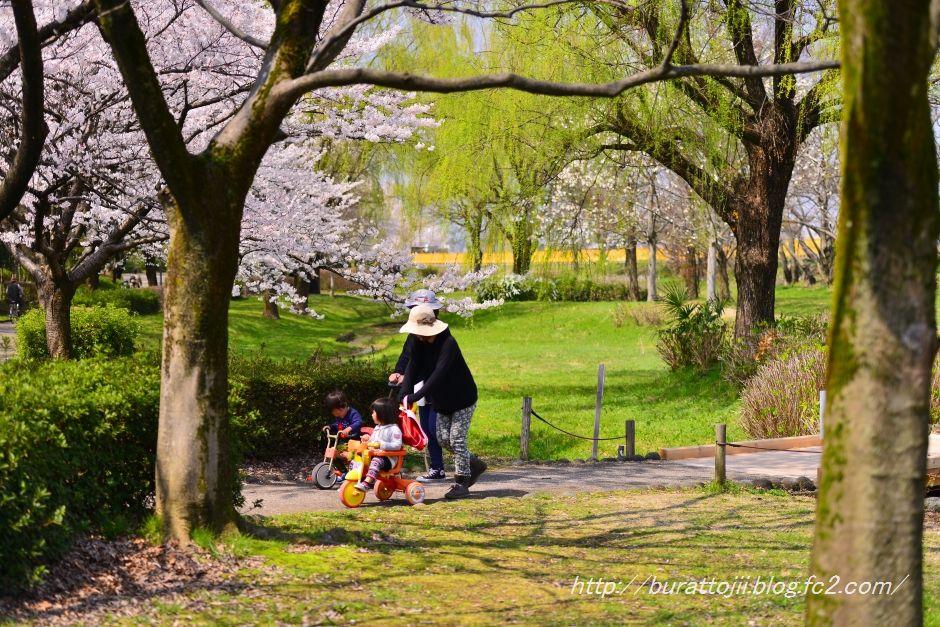 2014.04.09犀川桜6