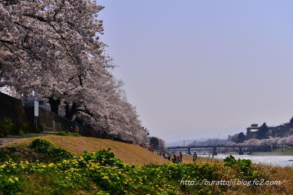 2014.04.09犀川桜4