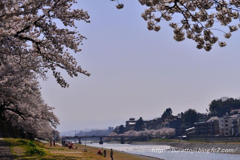 2014.04.09犀川桜3