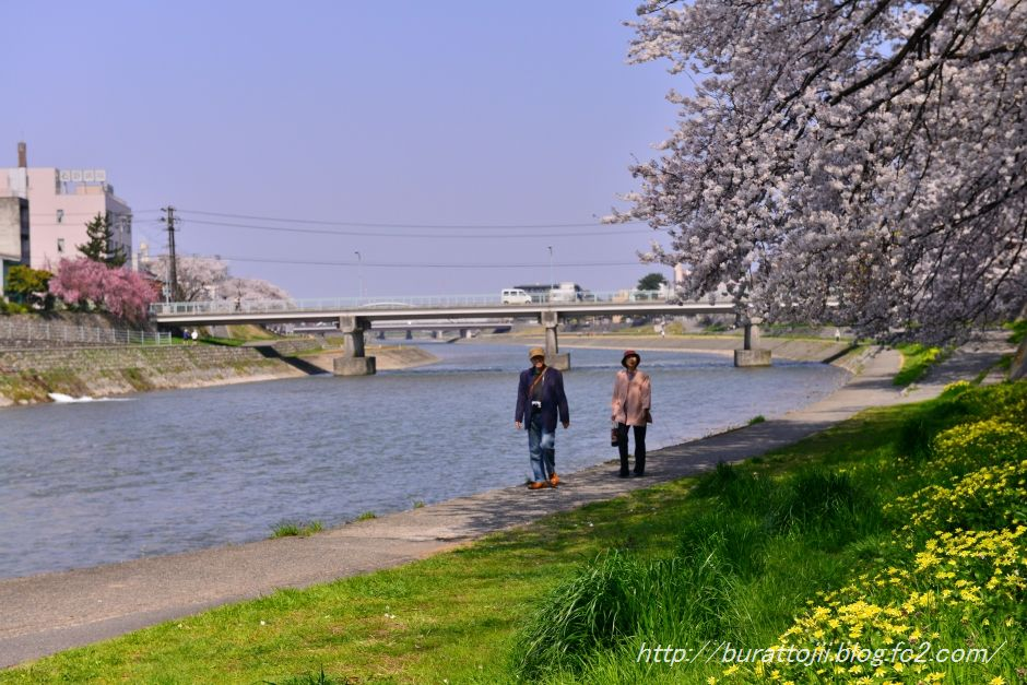2014.04.09犀川桜2