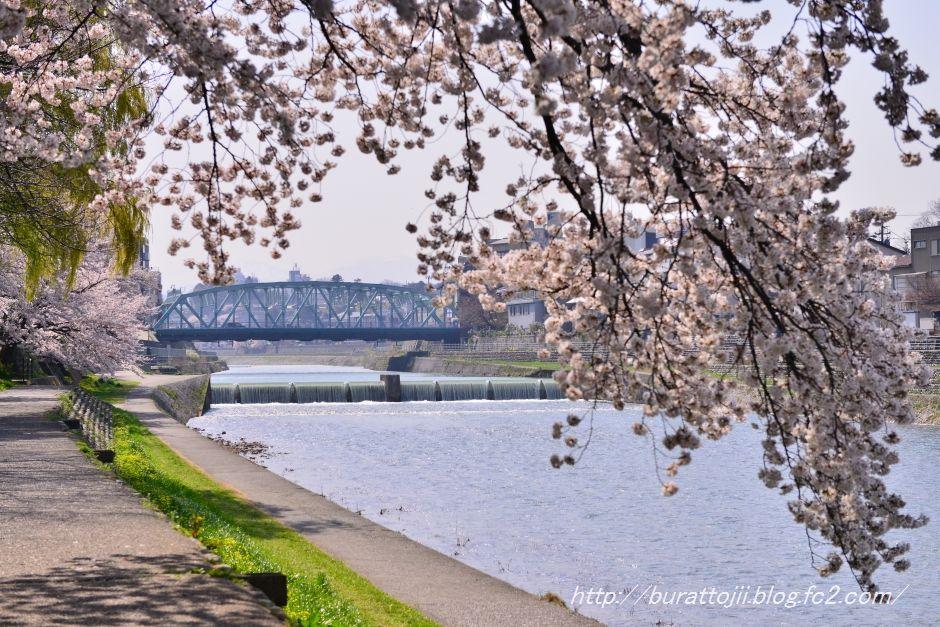 2014.04.09犀川桜1