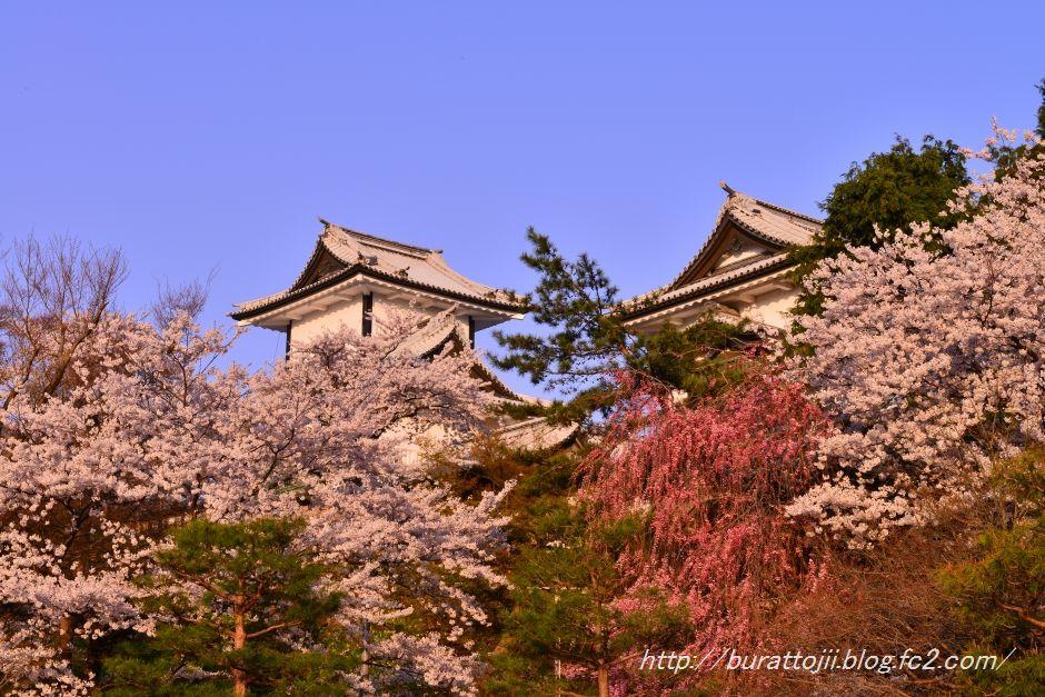 2014.04.11早朝の金沢城5